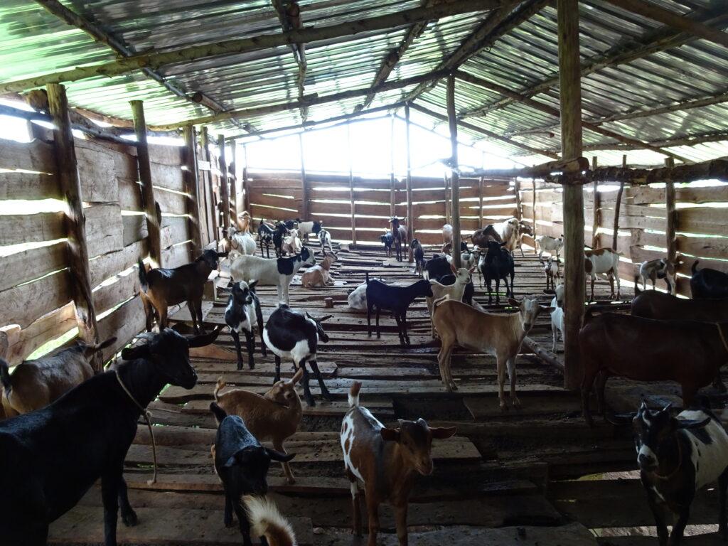 De geiten